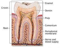 homeopathy for sensitive teeth