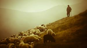 The Shepherd and the sheep. I am The Good shepherd. The Good… | by Great  Redemption Ministries | GRMBlogs