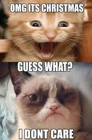 Grumpy cat on Pinterest   Christmas Meme, Roses Are Red and Cat Memes via Relatably.com