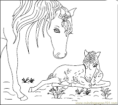 Small Picture Free Print Horse Coloring Pages free printable coloring page