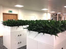 modern office plants. Filing Cabinet Planting Modern Office Plants E