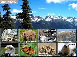 Animals and their Habitats KS1 by TheDonkeySanctuary - Teaching ...