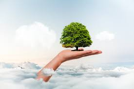 Free Images : save, planet, tree, leafs, environmental, eco, future, sphere, mother earth, clouds, concept, sky, hand, growth, growing, green, care, environment, leaf, forest, ecology, organic, safe, cloud, People in nature, plant,