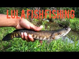 lula fish fishing srilanka - YouTube