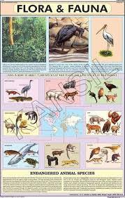 Flora Fauna For Man Environment Chart