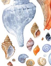 Seashell Collection Watercolor Print