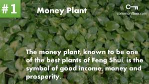 feng shui plant office. 10 Important Feng Shui Plants To Attract Money And Prosperity Your Home Plant Office F