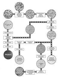 Курсовая работа Особенности разведения сои в условиях Приморского  Приложение 5