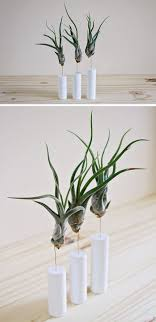 Air Plant Display 12 Elegant Ways To Bring Air Plants Into Your Home Contemporist