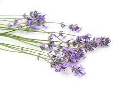 Resultado de imagen de fotos de hierbas aromaticas y medicinales
