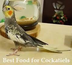 Cockatiel Diet Chart 5 Best Food For Cockatiels Types Of Diet 2019 Cockatielreview