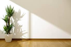 Pflanzen Die Kaum Licht Brauchen Heimhelden