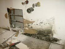 how to kill bathroom mold. Gallery Of Bunch Ideas Black Mold Bathroom Also How To Kill