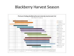 Blackberry Ripening Chart Blackberry Variety Primer