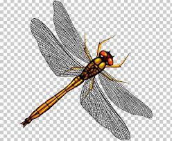 Beneficial Insects Chart Dragonfly Mosquito Stock Insect Png Clipart Arthropod