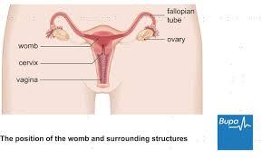 Ovarian Cyst Size Chart Answers On Healthtap