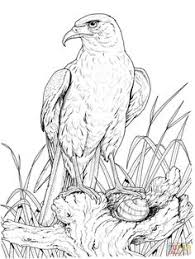 Small Picture Eagle coloring pages 8 Eagle Coloring Pages Pinterest Eagle