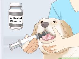 How To Treat A Dog Who Ate Chocolate 8 Steps With Pictures