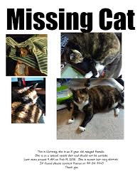 Lost Cat Flyer Triangle Lost Pets Of Central North Carolina Animal Photos