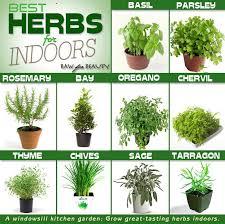 list of container herb garden ideas