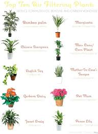 types of indoor plants with pictures types of indoor plants common indoor plants in common indoor