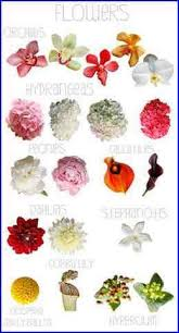 types of flowers with names. kinds of flowers and their names types with