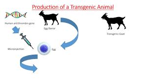 Transgenic Animals Transgenic Animals Animation Genetics And Biotech Youtube