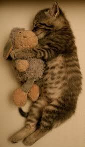 baby cats big hug adi nag sleeping porch