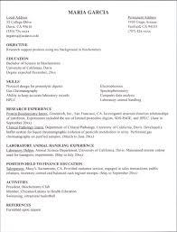 internship cv examples