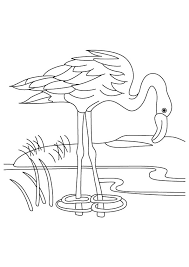 A Flamingo Drinking Water Coloring Page Free Printable Coloring