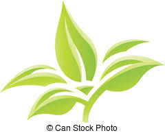 tobacco plant clipart. Fine Tobacco Tobacco Plant Vector Clipart And Illustrations 467 And Plant Clipart