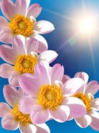 beautiful flowers hd picture