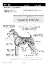 Pin By Kelly Fring On Dog Grooming Dog Grooming Business