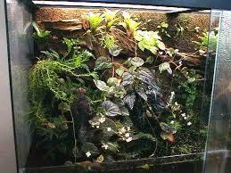 Image result for jungle terrarium images