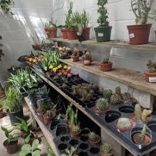 photo of garden gate nursery gainesville fl united states cute little cacti