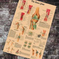 Medical Anatomy Anatomical Knee Joint Chart Classic Canvas Paintings Vintage Wall Posters Stickers Home Decor Gift