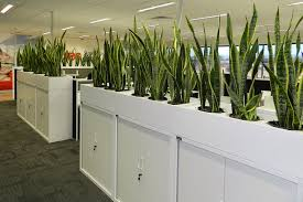 Diy Aspen Planter Top Storage Unit Tambour Specfurn Planter Top Units For Greener Office Design Aspen Interiors