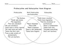 Prokaryotes Vs Eukaryotes Venn Diagram Worksheet Prokaryotes And Eukaryotes Worksheet Answers Unique The Differences