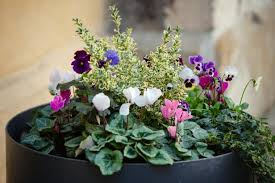how to protect potted plants in winter