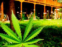 legalization of medical marijuana at the federal law   mgorka comlegalization of medical marijuana at the federal law
