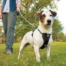 Tru Fit Smart Dog Walking Harness