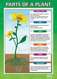 Plant Chart Parts Of A Plant Science Posters Gloss Paper Measuring