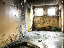 Black Mold Symptoms and Health Effects | HGTV