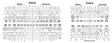 Orthodontic Tooth Chart Specific Tooth Number Chart Usa Pediatric Tooth Chart