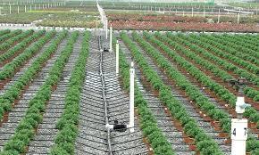 drip irrigation system watering diy indoor