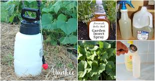 garden pesticides. 10 Homemade Insecticides That Keep Your Garden Pest Free Naturally Pesticides