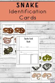Australian Snake Chart Snake Identification Cards Simple Living Creative Learning