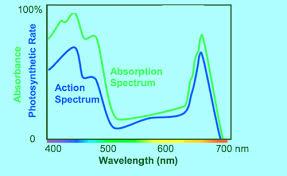 Action Spectrum Agricultural Lighting Parameters Lighting Passport