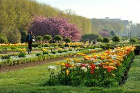 paris botanical garden photo 9