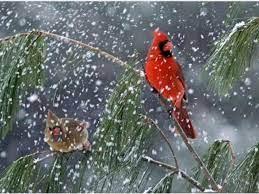 Free Winter Birds Desktop Wallpaper ...